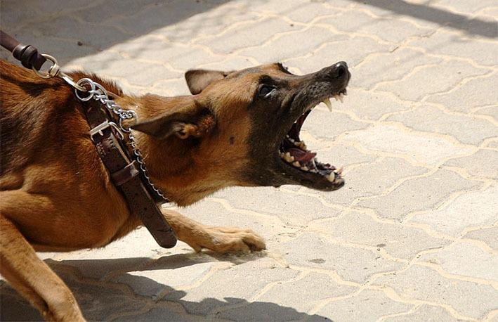 Koira Ulkomailta